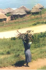 Images from Woza Nawe Cultural Tours - Swazi woman carrying wood